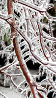 Ice Storm Branches 1