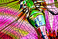 Dragonfly 6 Close up of Green Darner