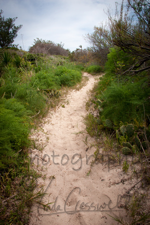 A Worn Trail